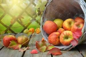 Apples for health & wellness