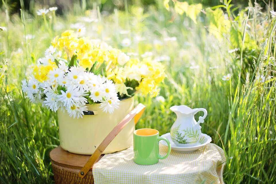 Weight loss - green tea